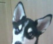 Hi! I am Lucca