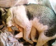Chinto Sleeping