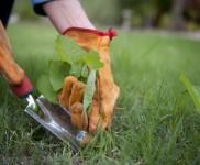 Highly Effective Monsoon Gardening Tips