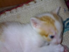 White Torro & Golden Kitty Photos