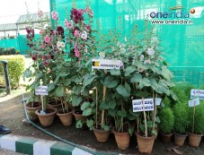 Lalbagh Flower Show for Republic day 2012 Photos