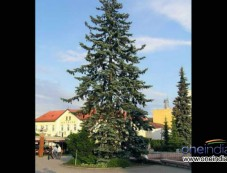 Types Of Live Christmas Trees Photos