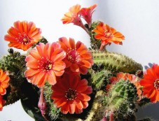 10 Types Of Cactus To Grow At Home Photos