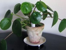 Easy To Grow Indoor Plants Photos