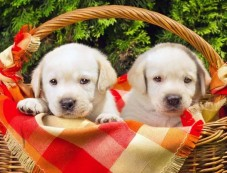 Things To Know Before Owning A Puppy Photos