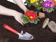 How To Pick Up Garden-Friendly Soil Photos