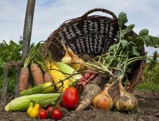 Grow Winter Vegetables Organically Photos