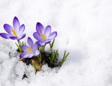 How To Protect Delicate Flowers In Winter Photos