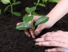 Four Home Remedies To Acidify Soil Photos