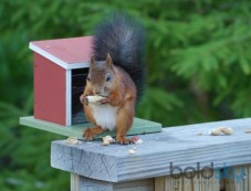 Ways To Prevent Squirrels From Eating Your Garden Photos