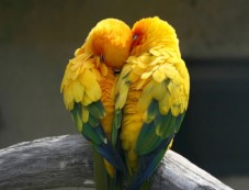 Common Health Problems Of Love Birds Photos