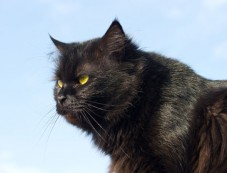 Superstitions About Cats From Around The World Photos