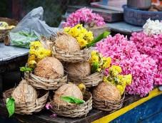 Coconuts Photos