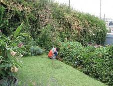 Gardening during Tips July Photos