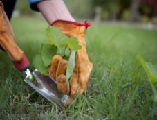 Highly Effective Monsoon Gardening Tips Photos