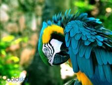 Blue Fronted Amazon Photos