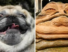 Dogs That Freakishly Resemble Other Things! Photos