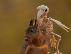 This Is How Squirrels Celebrate Halloween Photos