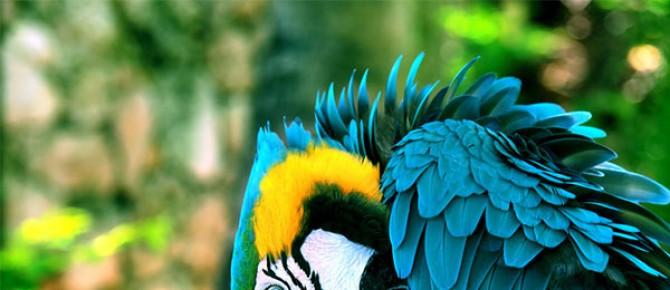 The Best Talking Pet Birds For Pet Lovers