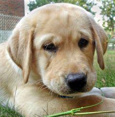 Pet dog Juiny