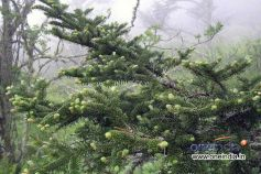 Types Of Live Christmas Trees