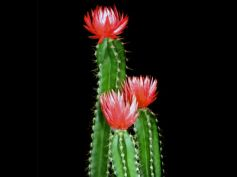 10 Types Of Cactus To Grow At Home