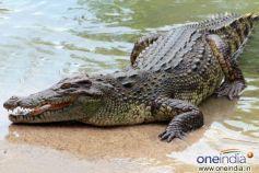 Lord Varuna, God of Rain rides on a crocodile.