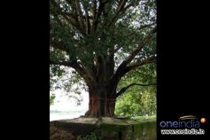 Significance Of Sacred Trees In India