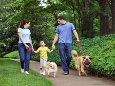 Things To Know Before Adopting A Dog