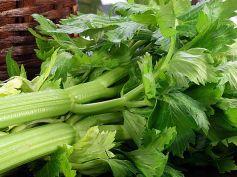 Dissolve Kidney Stones With Herbs Celery