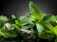 Treat Food Poisoning with Home Remedie Peppermint