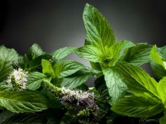 Try Herbs To Quit Smoking Peppermint