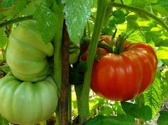 Vegetables To Grow In Winter Garden Tomatoes