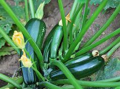 Vegetables To Grow In Winter Garden Winter Squash