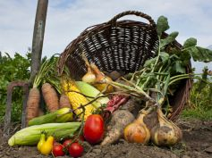 Grow Winter Vegetables Organically