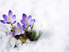 How To Protect Delicate Flowers In Winter