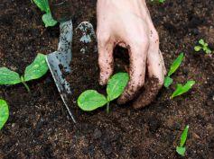 Properly loosened soil