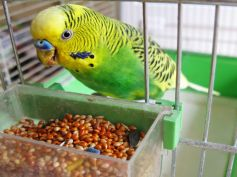Tips To Care For Pet Birds During Winter Season