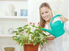 Brighten Houseplants