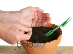 Best Gardening Tips For Planting Seeds
