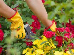 Make Your Garden Diverse