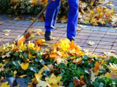 Tips For Cleaning Your Yard