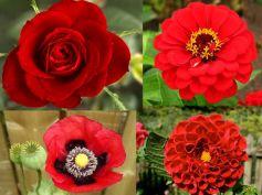 Bee Friendly Plants/Flowers