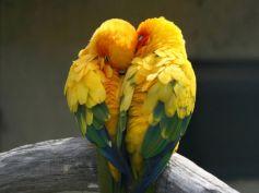 Common Health Problems Of Love Birds