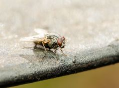 Tricks To Keep Flies Away From Home