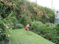 Gardening during Tips July