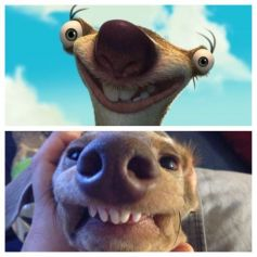 Dogs That Freakishly Resemble Other Things!