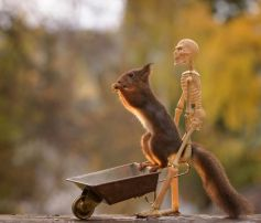 This Is How Squirrels Celebrate Halloween