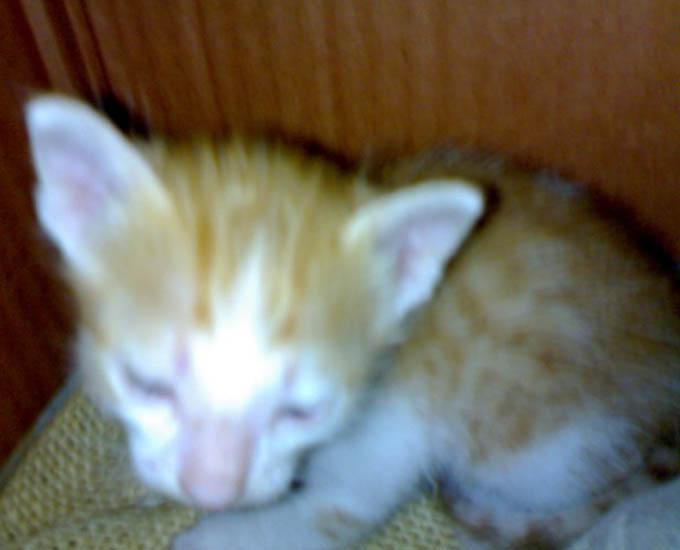 White Torro & Golden Kitty