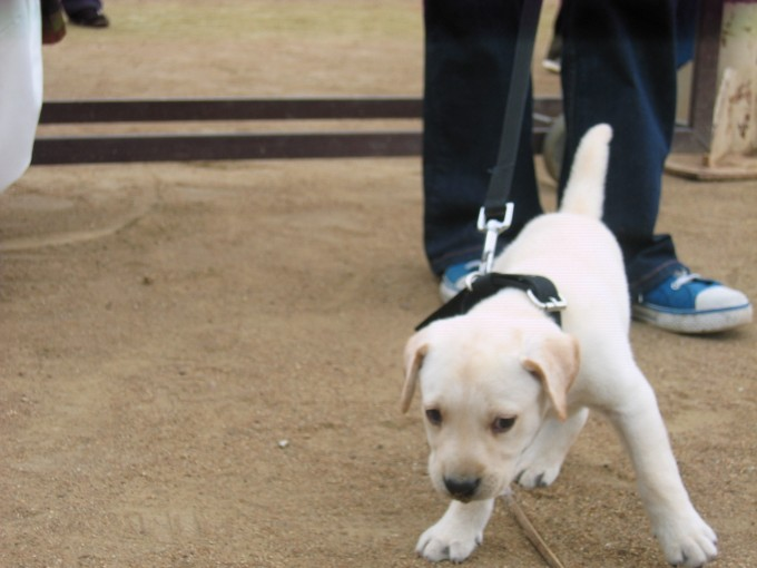Bangalore dog show - Doggies Day Out - 2